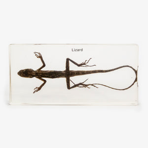 Lizard Resin Paperweight