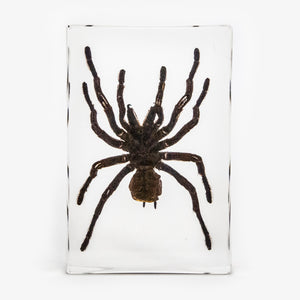 Large Tarantula Resin Paperweight