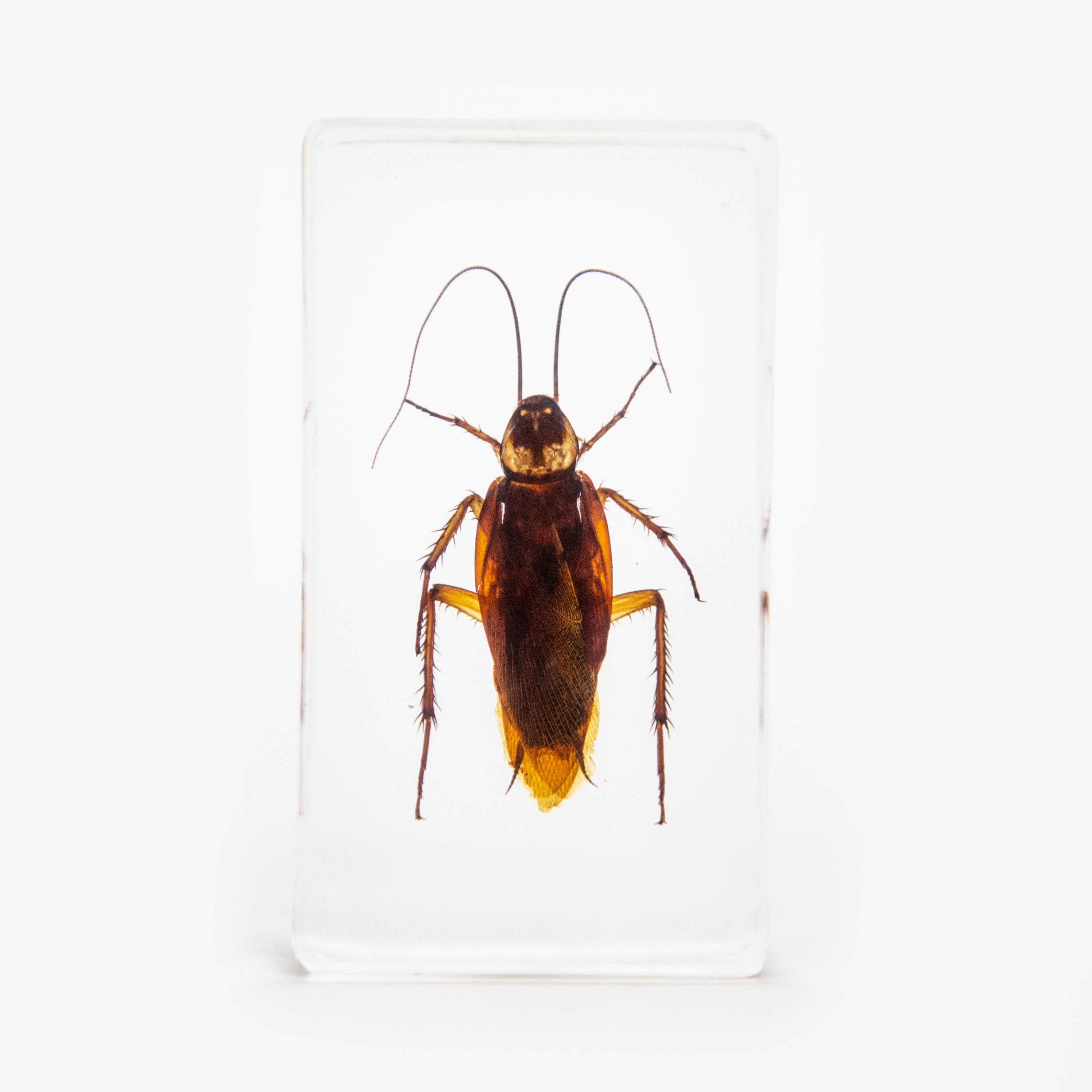 Cockroach Resin Paperweight