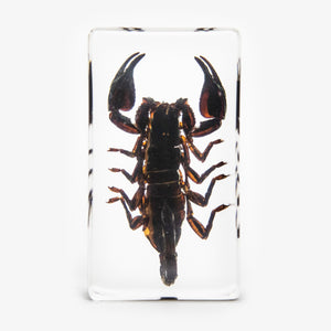 Black Scorpion Resin Paperweight