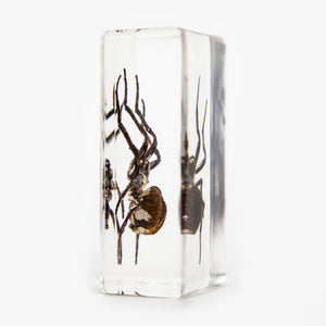 Spider Resin Paperweight
