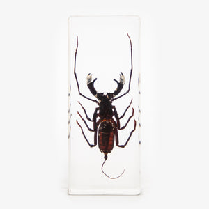 Whip Scorpion Resin Paperweight