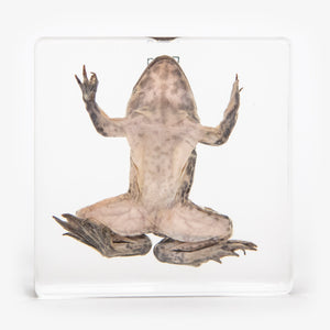 Frog Resin Paperweight