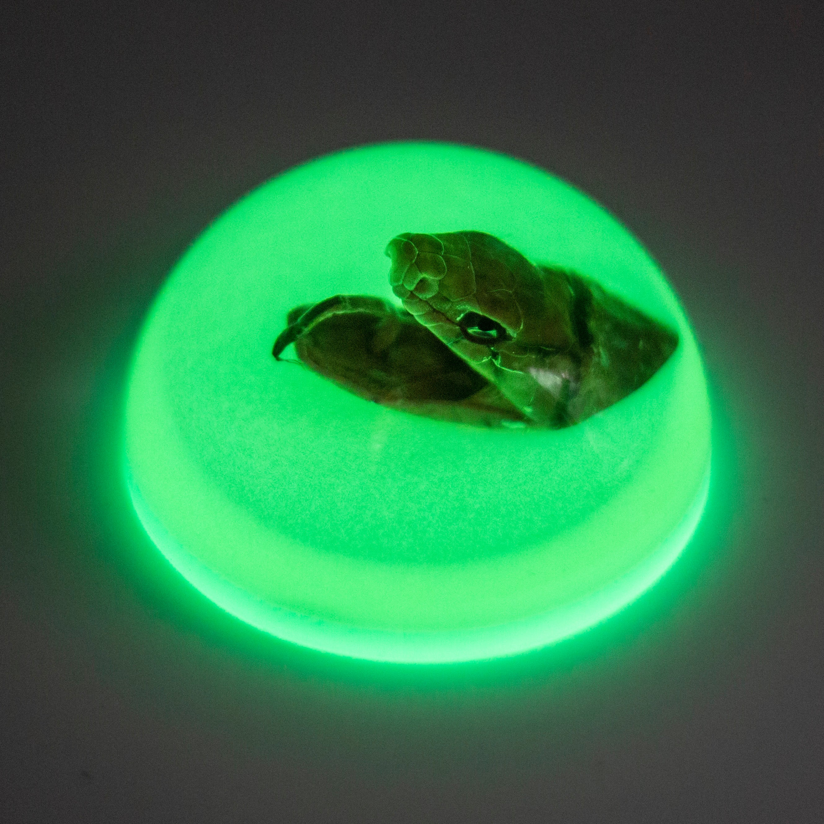 Snake Head Glow in the Dark Paperweight