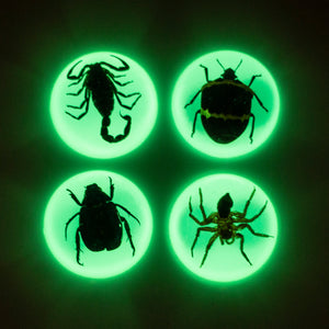 Glow in the Dark Specimen Fridge Magnet