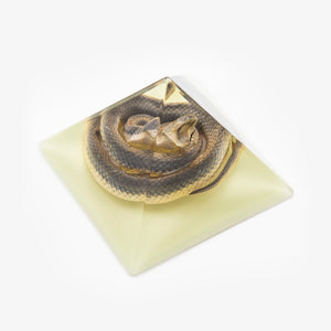 Chinese Water Snake Resin Pyramid