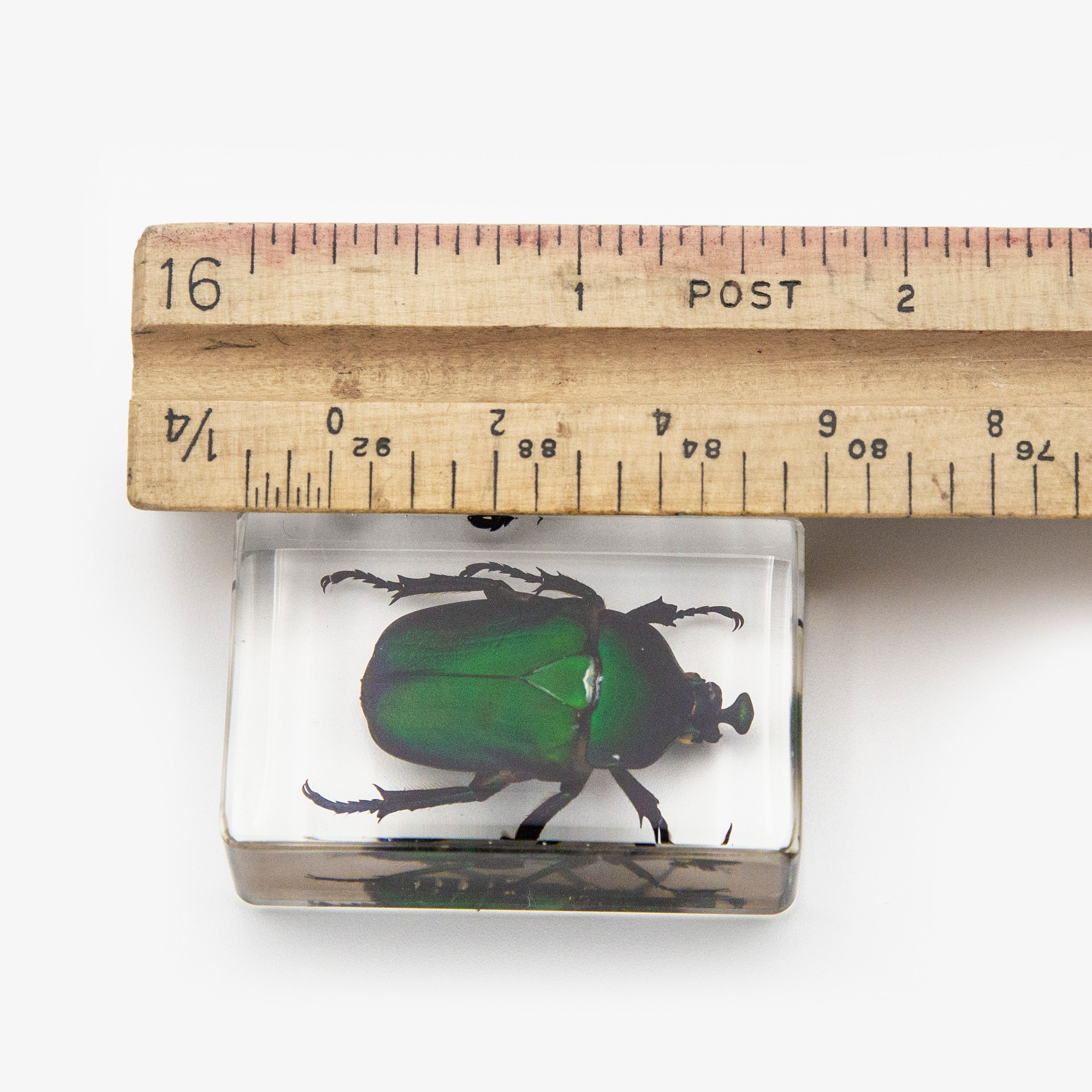 Green Chafer Beetle Resin Paperweight (Small)