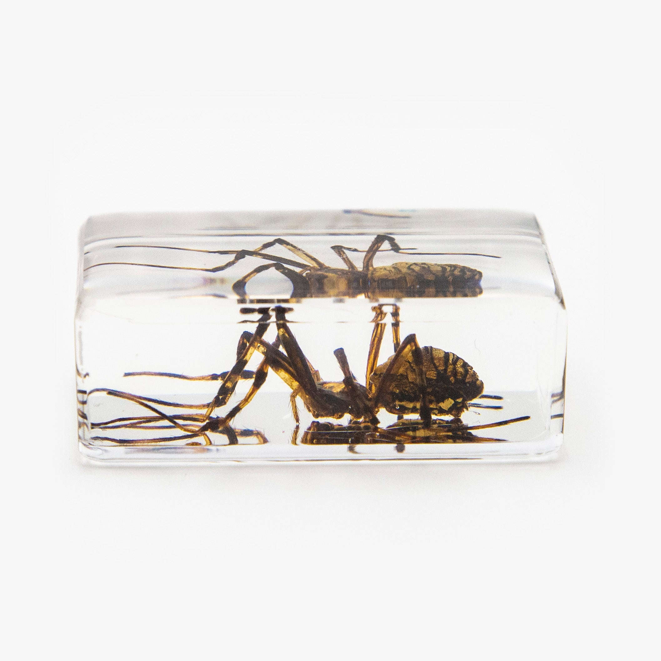 Spider Resin Paperweight (Small)