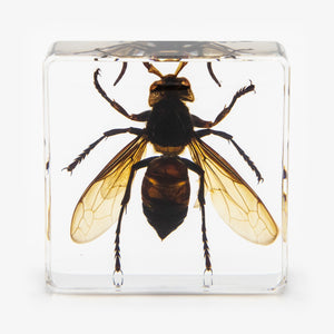 Flying Wasp Resin Paperweight (Small)