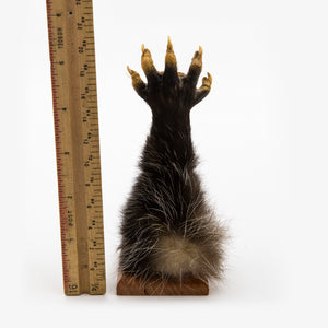Taxidermy Opossum Paw