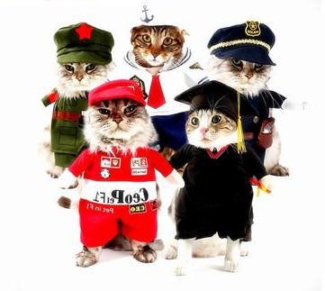 Top Selling Pet Sweaters, Best Selling Funny Cat Clothes,  Clothing Costume For Cat Cool Christmas Halloween Costme