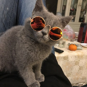 Dog Cat Pet Glasses For Pet Products Little Dog Eye-wear Dog Pet Sunglasses Photos Props Accessories Pet Supplies Cat Glasses
