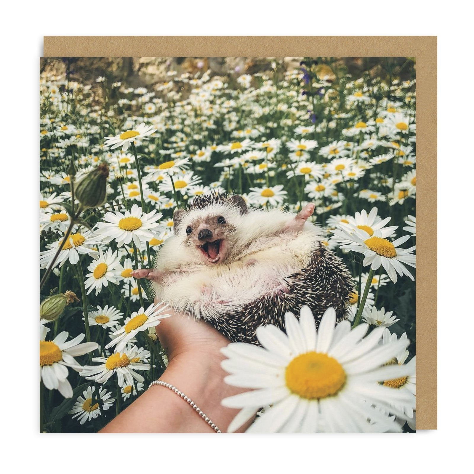 Hedgehog Daisy Field Square Greeting Card