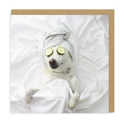Pampered Pooch Square Greeting Card