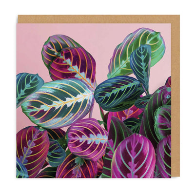 Prayerplant Square Greeting Card