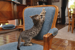 cat scratching a chair