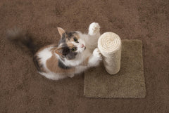 fluffy cat using scratching post