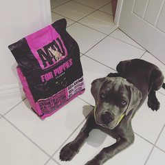 grey puppy on the kitchen floor with bag of AATU for puppies