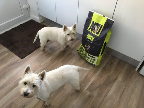 Two dogs with AATU duck flavour dog food