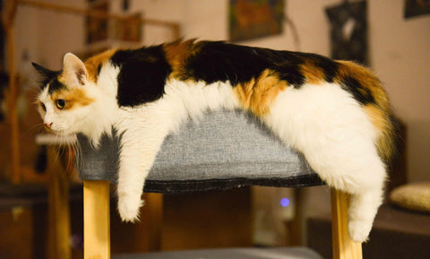 Cat stretching out over chair
