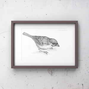 Sparrow, Limited edition print