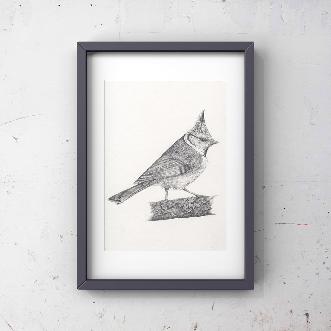 Crested tit limited edition print