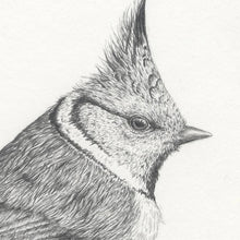 Load image into Gallery viewer, Crested tit limited edition print