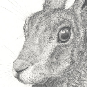 Hare, Limited edition print