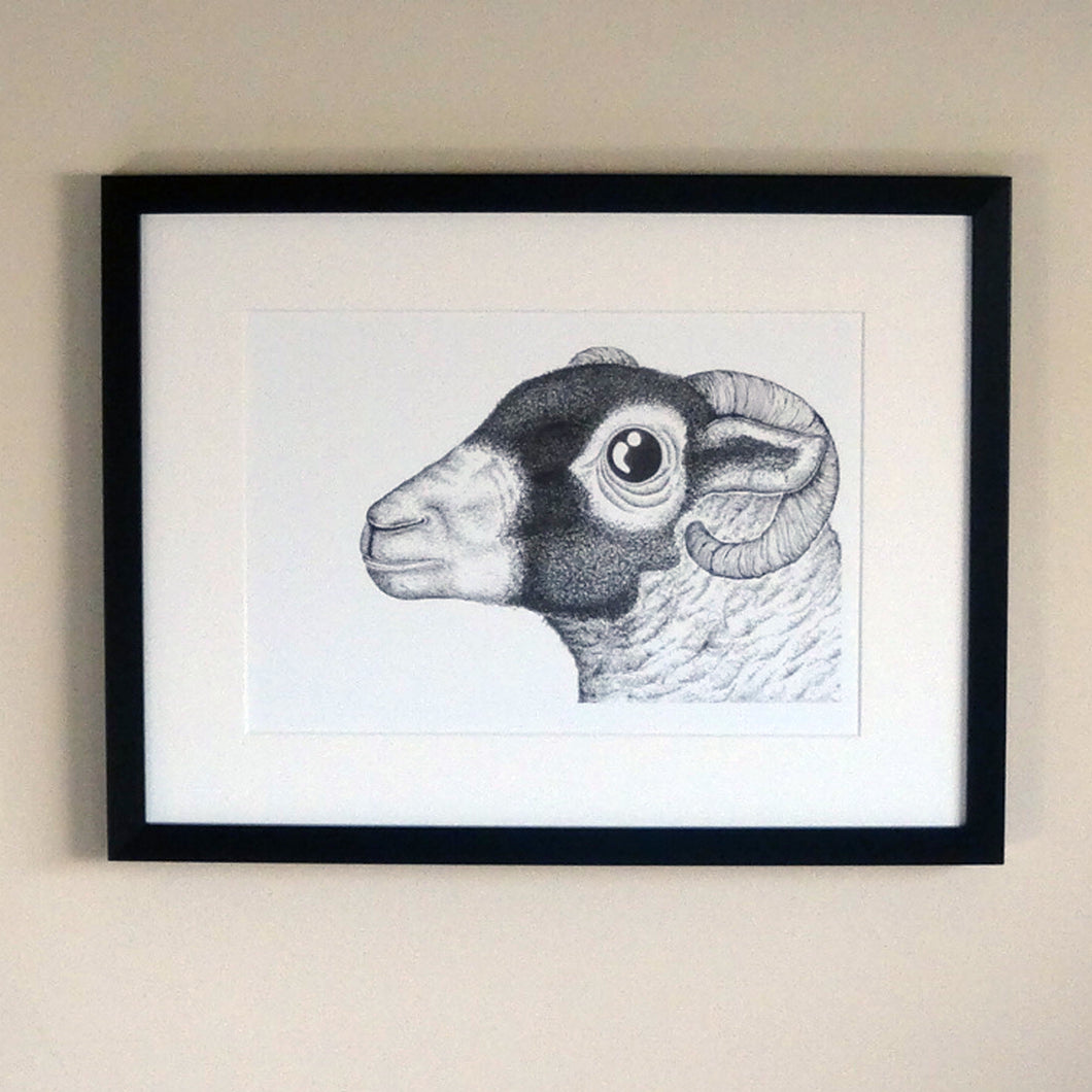 The Swaledale Ewe risograph print