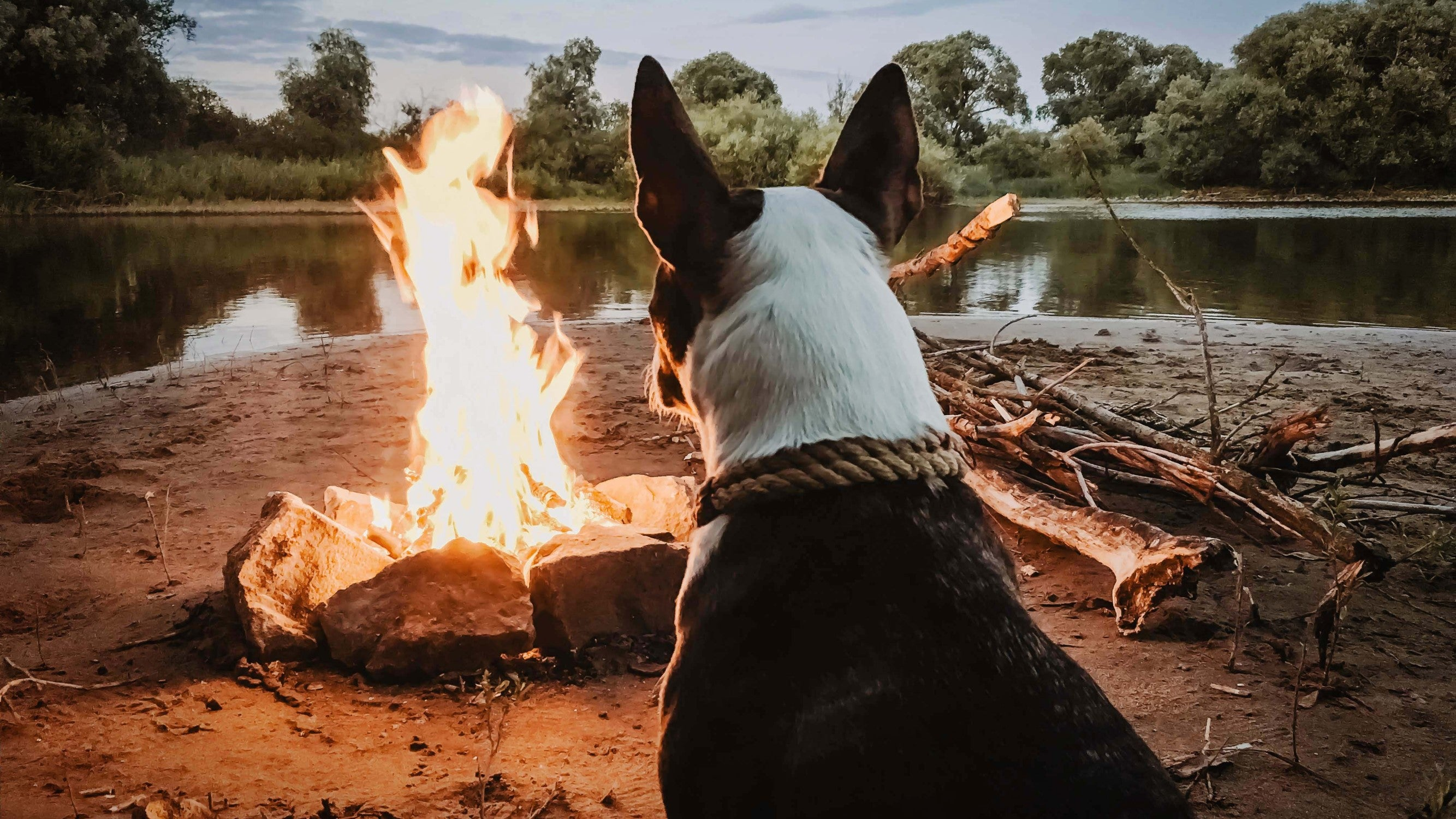 Dog By Campfire