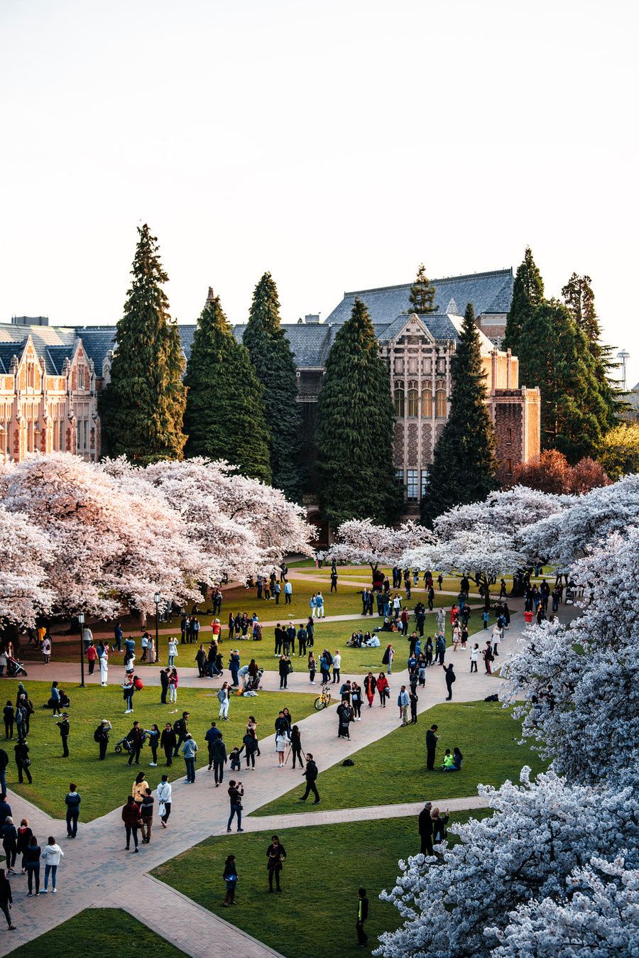 THE UNIVERSITY OF WASHINGTON SAKURA