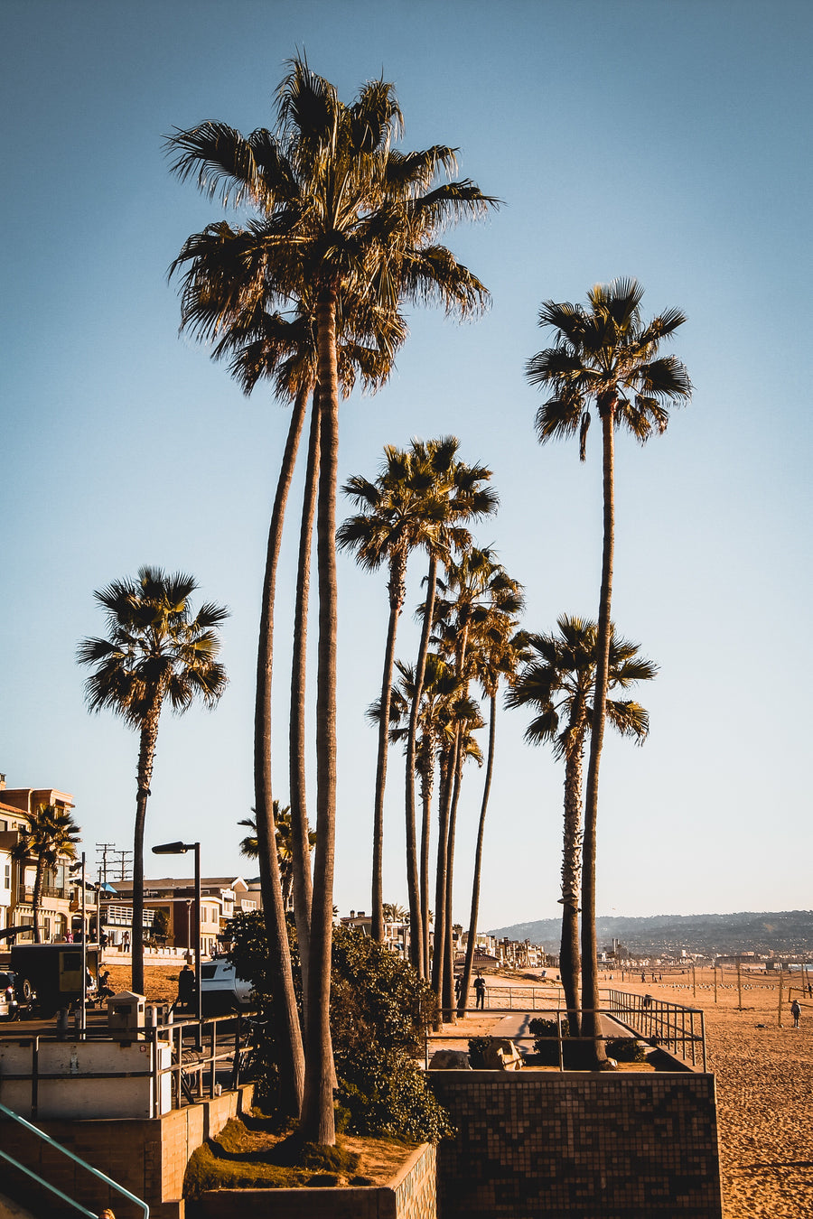 LOS ANGELES PALMS