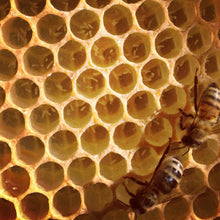 Load image into Gallery viewer, Raw Bee Honey