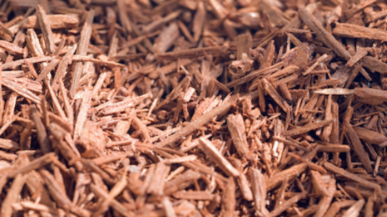 Australian Sandalwood | Woody, Sweet, & Ecologically Responsible