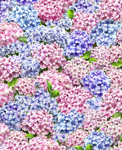 Peaceful Garden -  Packed Hydrangea