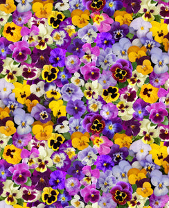 Spring Beauty-Packed Pansies