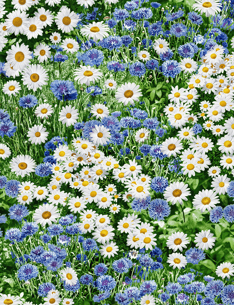 Freedom Farm - Daisies and Cornflowers
