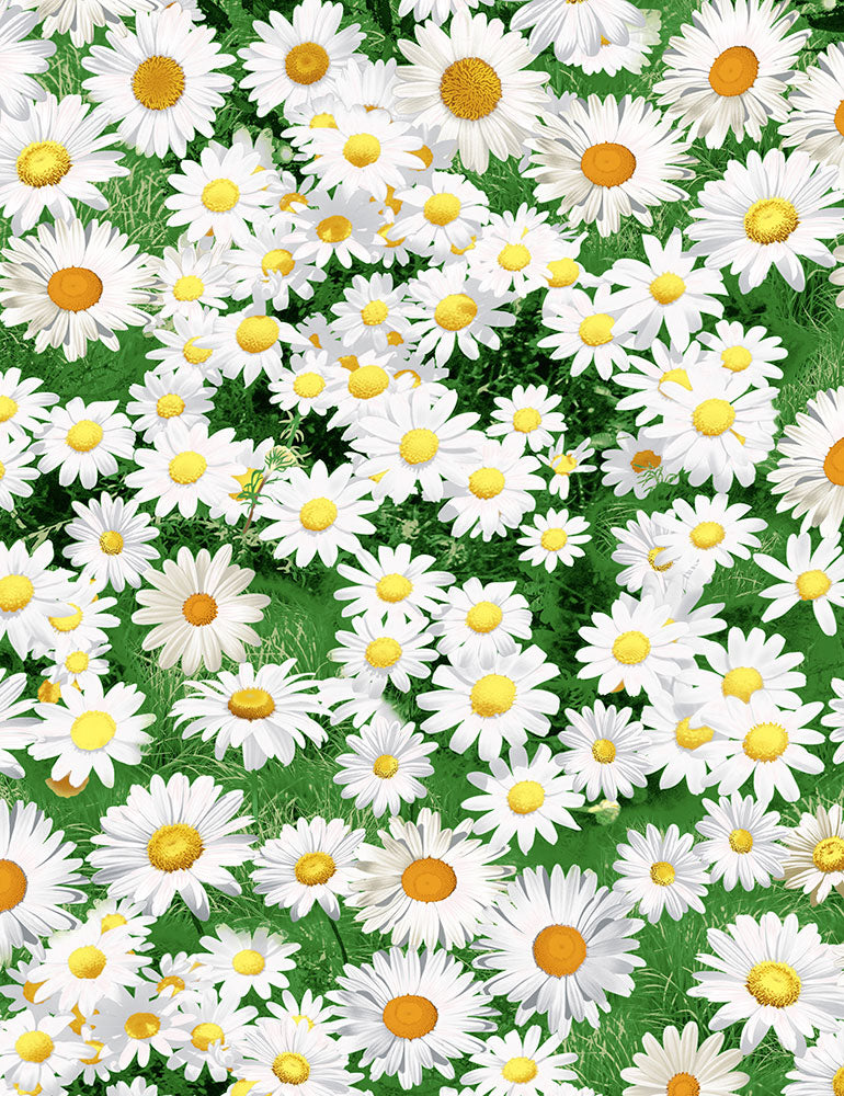 Freedom Farm - Daisies
