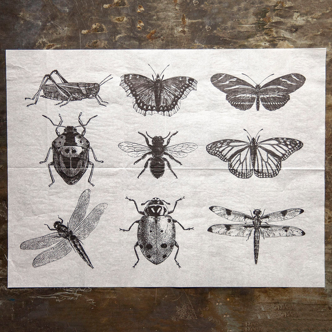 Ink Transfer - Insects - 23.5in x 16.5in