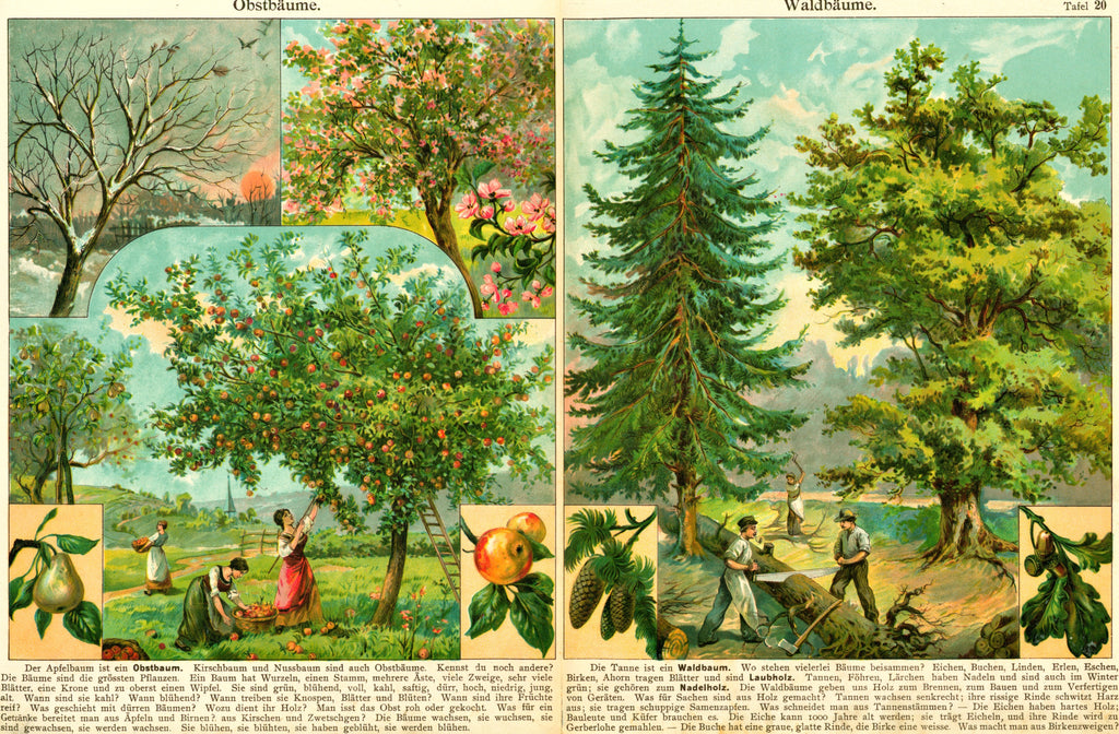 Apple & Pear Gardens- Antique Chromolithograph (c1900)