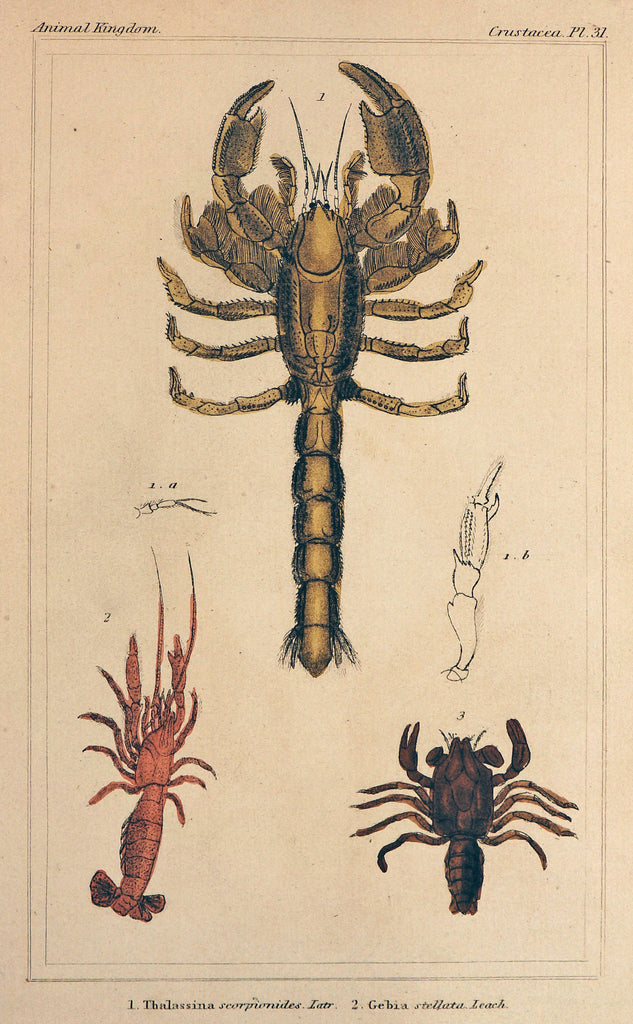 Lobsters, Hand Colored Engraving (1837) - Original and Authentic Vintage Poster