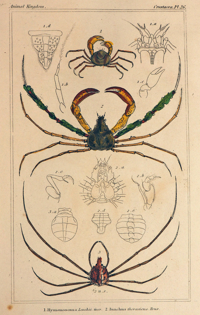 Crabs, Lobster Antique Engraving (1837) - Original and Authentic Vintage Poster
