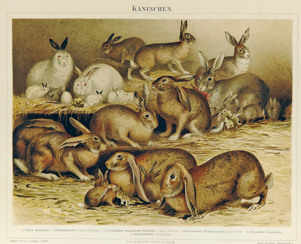 Rabbits Antique Chromolithograph (1895) - Original and Authentic Vintage Poster