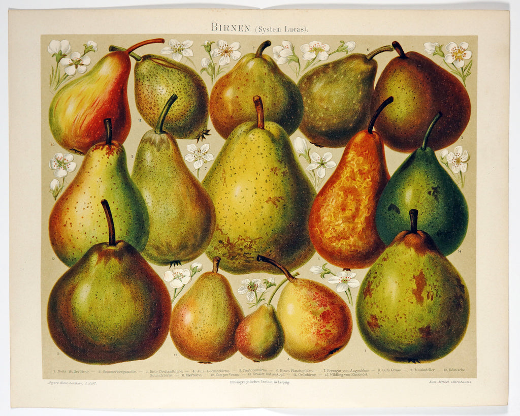 Pears, Fruit System Lucas Antique Chromolithograph (1895) - Original and Authentic Vintage Poster