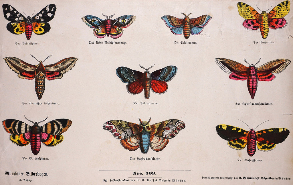 Butterfly & Moth Hand colored Engraving (1887) - Original and Authentic Vintage Poster