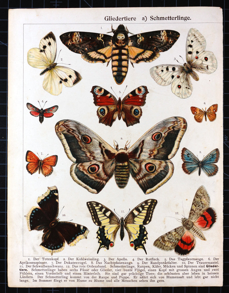 Butterfly, Moths Death's-head Hawkmoth Antique Chromolithograph (1900s) - Original and Authentic Vintage Poster