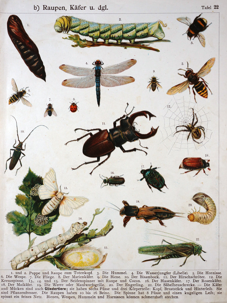 Bees, Wasps, Beetles, Grasshoppers and More, Antique Chromolithograph  (c1900) - Original and Authentic Vintage Poster