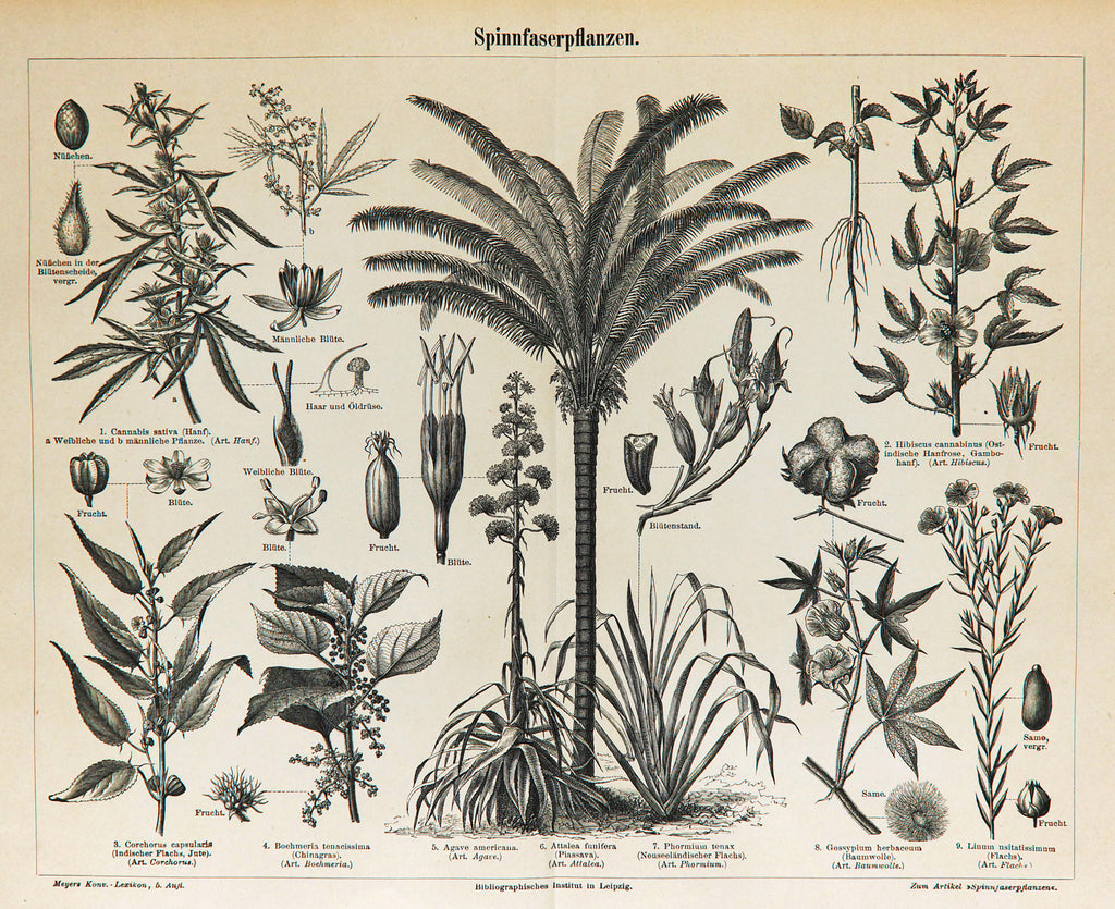 Fiber Plants, Palms & Cannabis Antique Engraving (1895) - Original and Authentic Vintage Poster