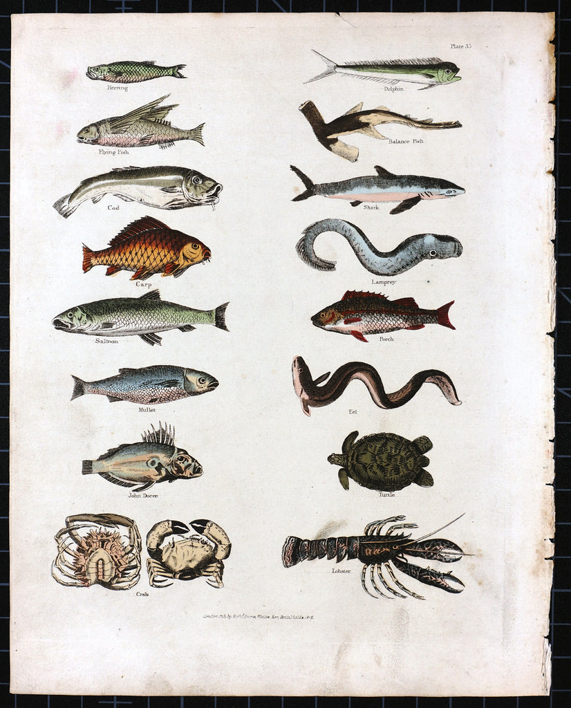 Lobster, Crab, Shark & Turtle Hand Colored Engraving (1827) - Original and Authentic Vintage Poster