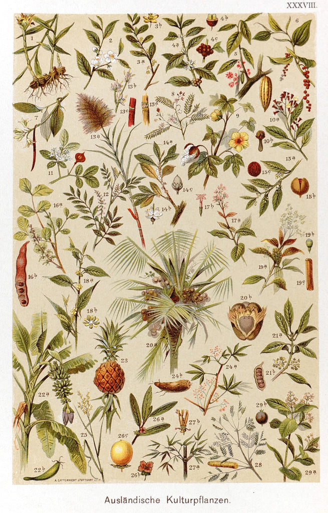 Tropical Botanicals Antique Chromolithograph (1890) - Original and Authentic Vintage Poster